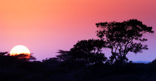 Sunrise in the bushveld. (focus on tree) - Kruger National Park Royalty Free Stock Photography