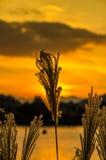 Sunrise on a calm lake Stock Image