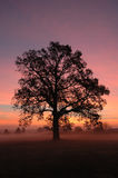 Sunrise in Canton OH. Silhouette of a tree stock photos