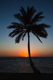 Sunrise on the Caribbean Coast of Belize. Palm tree greets the sunrise on the coast of Belize Stock Photos