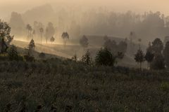 Sunrise in cemoro lawang near mount Bromo royalty free stock images