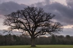 A cloudy sunrise on Southampton Common stock photos