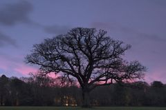 A cloudy sunrise on Southampton Common royalty free stock images