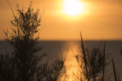 Sunrise on the coast of the Adriatic in Italy Royalty Free Stock Photo