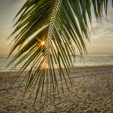 Sunrise with coconut palm leaves on tropical beach background Royalty Free Stock Images