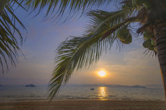 Sunrise with coconut palm trees and coconuts fruit Stock Photo