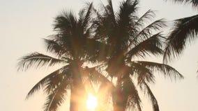 Sunrise in the coconut tree stock video