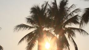 Sunrise in the coconut tree stock footage
