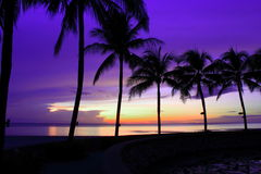Sunrise with coconut trees Royalty Free Stock Photo