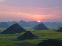 Sunrise on cole flowers ocean. Time:7:40 February,spring festival of China Stock Photography