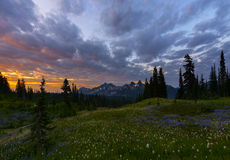 Sunrise Colors in Mt Rainier NP Stock Image