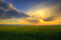 Sunrise with colza field Stock Photos