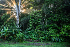 Sunrise in Corcovado National Park Costa Rica Royalty Free Stock Photography