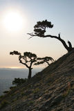Sunrise in Crimea. Beautiful sunrise in crimea mountains Stock Photography