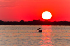 Sunrise in the Danube Delta Royalty Free Stock Photography