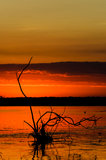 Sunrise in Danube Delta Stock Image