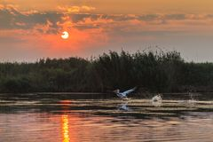 Sunrise in the Danube Delta Royalty Free Stock Photos