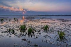 Sunrise in the Danube Delta Stock Image