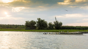 Sunrise in Danube Delta Stock Photos
