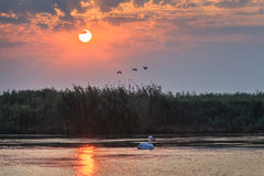 Sunrise in the Danube Delta, Romania Stock Image