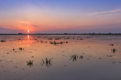 Danube Delta, Romania. Sunrise in the Danube Delta, Romania, Europe royalty free stock photography