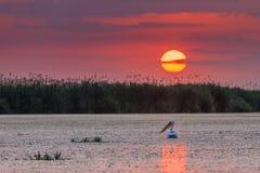 Danube Delta, Romania. Sunrise in the Danube Delta, Romania, Europe royalty free stock images