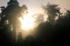 Sunrise in Danum Valley royalty free stock photography