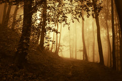 Sunrise in a dark forest with fog in autumn Royalty Free Stock Photos