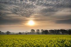 Sunrise dawn landscape over rapeseed canola field Royalty Free Stock Image