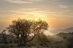 Sunrise in the mountains with sunrays. Sunrise with dead standing tree, location: Kingdom of Oman, Jebel Akhdar in more than 2300 meter above sea level stock photos