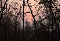 Sunrise in decidous forest of Pench Stock Photos