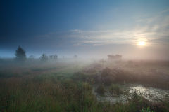 Sunrise in denfe fog over swamp Royalty Free Stock Images