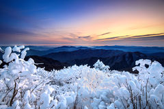 Sunrise on Deogyusan mountains covered with snow in winter,korea. Royalty Free Stock Photos