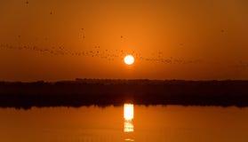 Sunrise of Desert Island Resort and Spa. This image was taken in Sir Bani Yas Island, Abu Dhabi Stock Photos