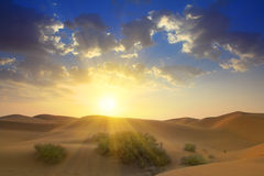Sunrise in desert Stock Images