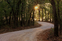 Sunrise Down a Winding Path Through the Woods. The sun begins to rise and shine through trees lining a winding path through the woods royalty free stock image