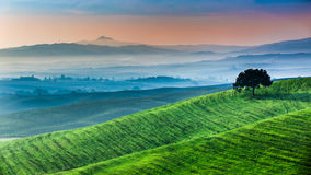 Sunrise of dreamland in Tuscany Stock Photos