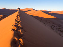 Sunrise at Dune 45, Namib Desert, Namibia Royalty Free Stock Images