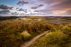 Sunrise in the Dunes of Katwijk. Windy conditions in the dunes of Katwijk, the Netherlands Stock Photography