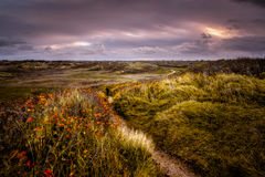 Sunrise in the Dunes of Katwijk. Windy conditions in the dunes of Katwijk, the Netherlands Stock Image