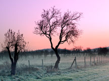 Sunrise in the early morning Royalty Free Stock Photos