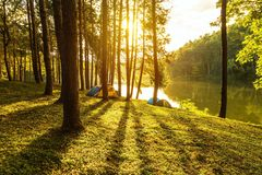 Sunrise at pang ung lake park with silhouette pine trees and shadow at Pai Mae Hong Son,Thailand. Sunrise in early morning at pang ung lake park with silhouette Stock Photo