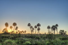 Sunrise on El Palmar National Park, Argentina Royalty Free Stock Images