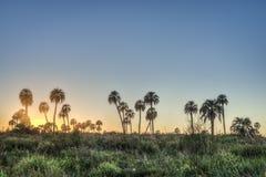 Sunrise on El Palmar National Park, Argentina Royalty Free Stock Images