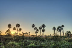 Sunrise on El Palmar National Park, Argentina Stock Photography