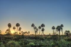 Sunrise on El Palmar National Park, Argentina Stock Photography