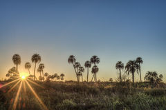 Sunrise on El Palmar National Park, Argentina Stock Photos