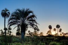 Sunrise on El Palmar National Park, Argentina Stock Photo