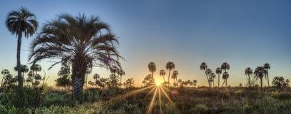 Sunrise on El Palmar National Park, Argentina Stock Images