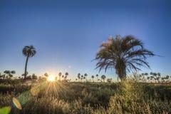 Sunrise on El Palmar National Park, Argentina Royalty Free Stock Image